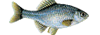 fdj2008-small.png